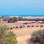 Camel Trekking Gran Canaria